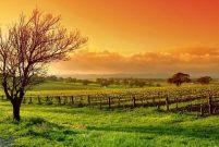 Toprak Reformu ile kamulaştırılan arazilerin iadesi gündemde
