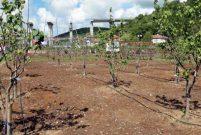 Beykoz'da 18,6 dönümlük halka açık meyve bahçesi açıldı