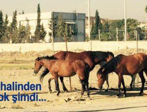 Alsancak Stadyumu başıboş atlara kaldı