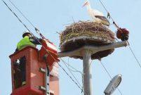 BEDAŞ kuşlara 500 konaklama tesisi yaptırdı