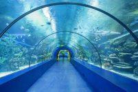 Deniz memleketi Trabzon'a tünel akvaryum yapılacak