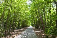 300 dönümlük Pendik Ytong arazisi koru olacak