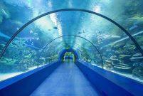 Tünel Akvaryum için TOKİ'den yer tahsisi yapıldı