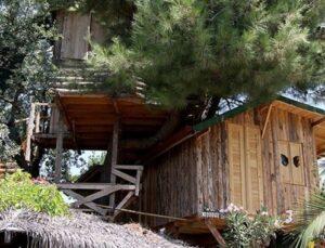 Kesmeye kıyamadığı ağaçların arasına ev inşa etti
