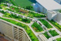 Yeşil çatılar, şehirlerde sel riskini azaltıyor