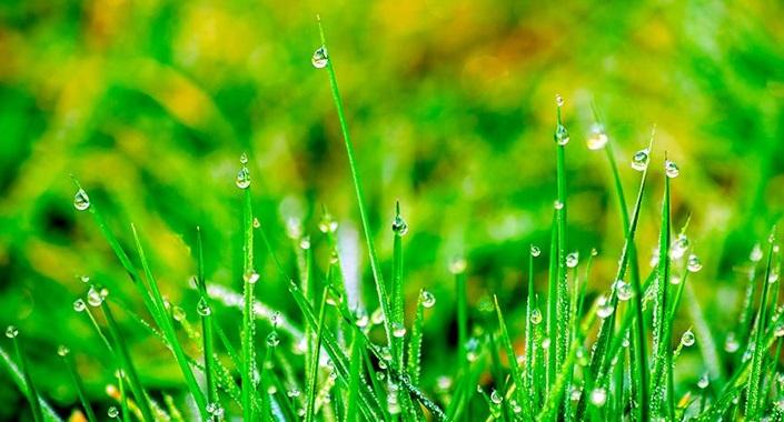 Kamu kurumlarına yağmur bahçeleri kurulacak
