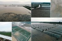 Mersin'de sağanak tarım alanlarına zarar verdi