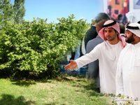 Araplar Karadeniz'de fındık bahçesi satınalıyor