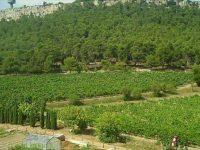 Atatürk Orman Çiftliği'nde 957 dönüm kiraya verilecek
