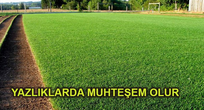 Kuraklığa dayanıklı çim üretilecek