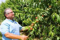 İnşaattan nektarine döndü, 100 ton hasat bekliyor