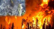 Orman yangınlarının sebepleri neden aydınlatılmıyor?