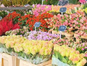 Ankara'da kiralık 50 çiçek satış büfesi