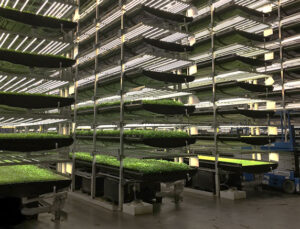 HGT Tarım bir milyon metrekarelik tarım fabrikası kuracak